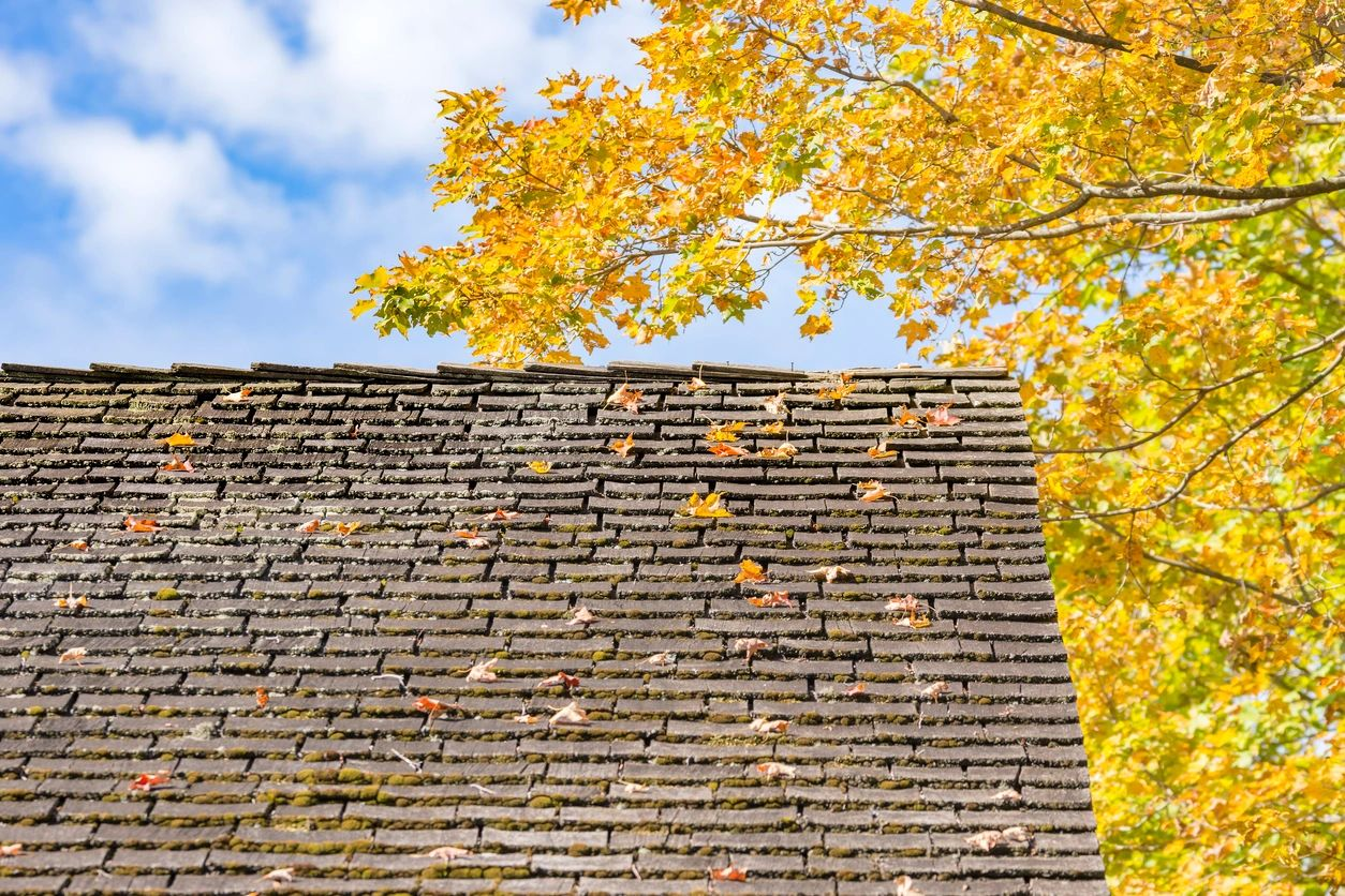 Old Roof With Fall Tree