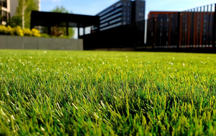 Image shows beautiful green grass